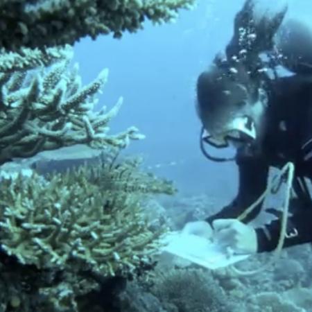 sketching underwater, diving, sea, art